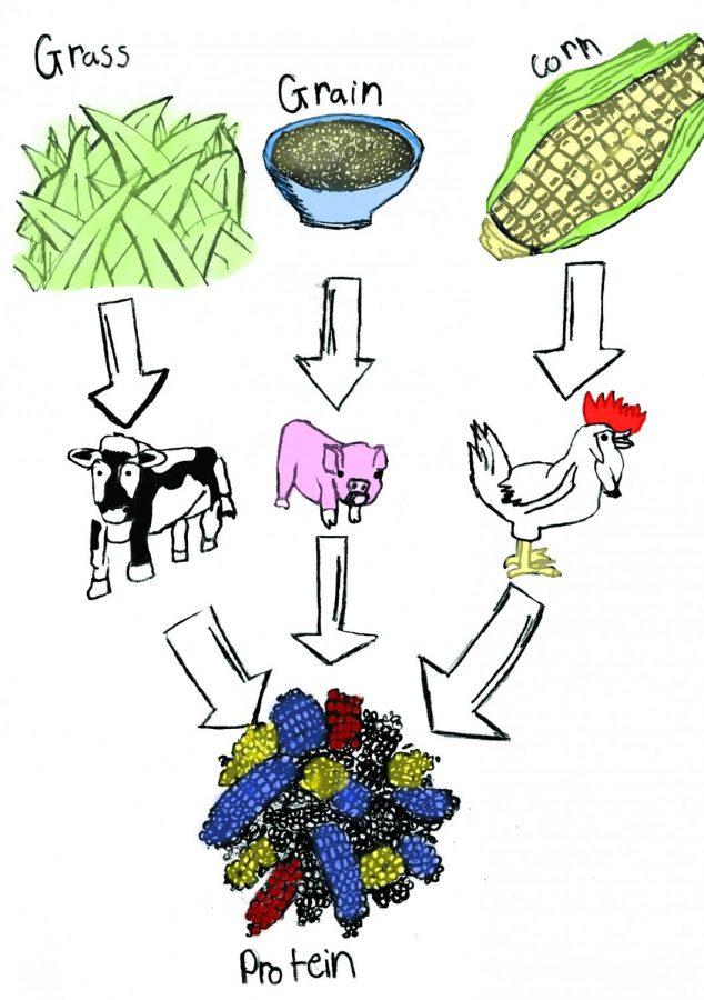 Promoting environmental and human health awareness through veganism