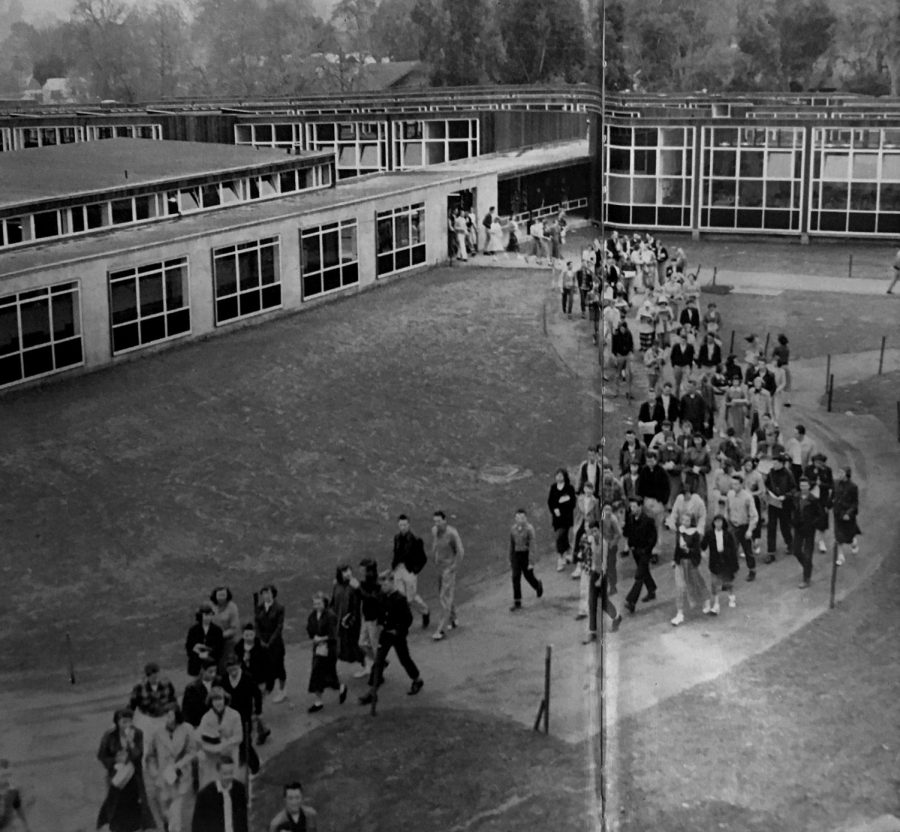 A picture of an image from a 1952 Drake yearbook depicts students crowding the senior tree area