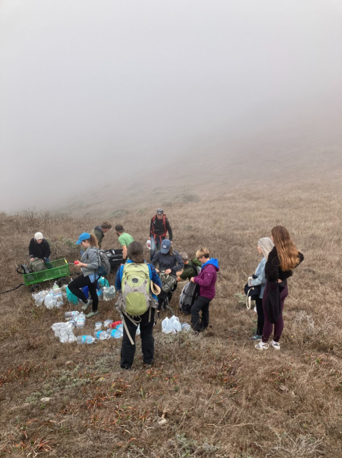Activists water Tule Elk on Tomales Point